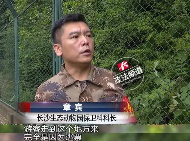 Three fare-dodging tourists risk their lives to get into a zoo for free