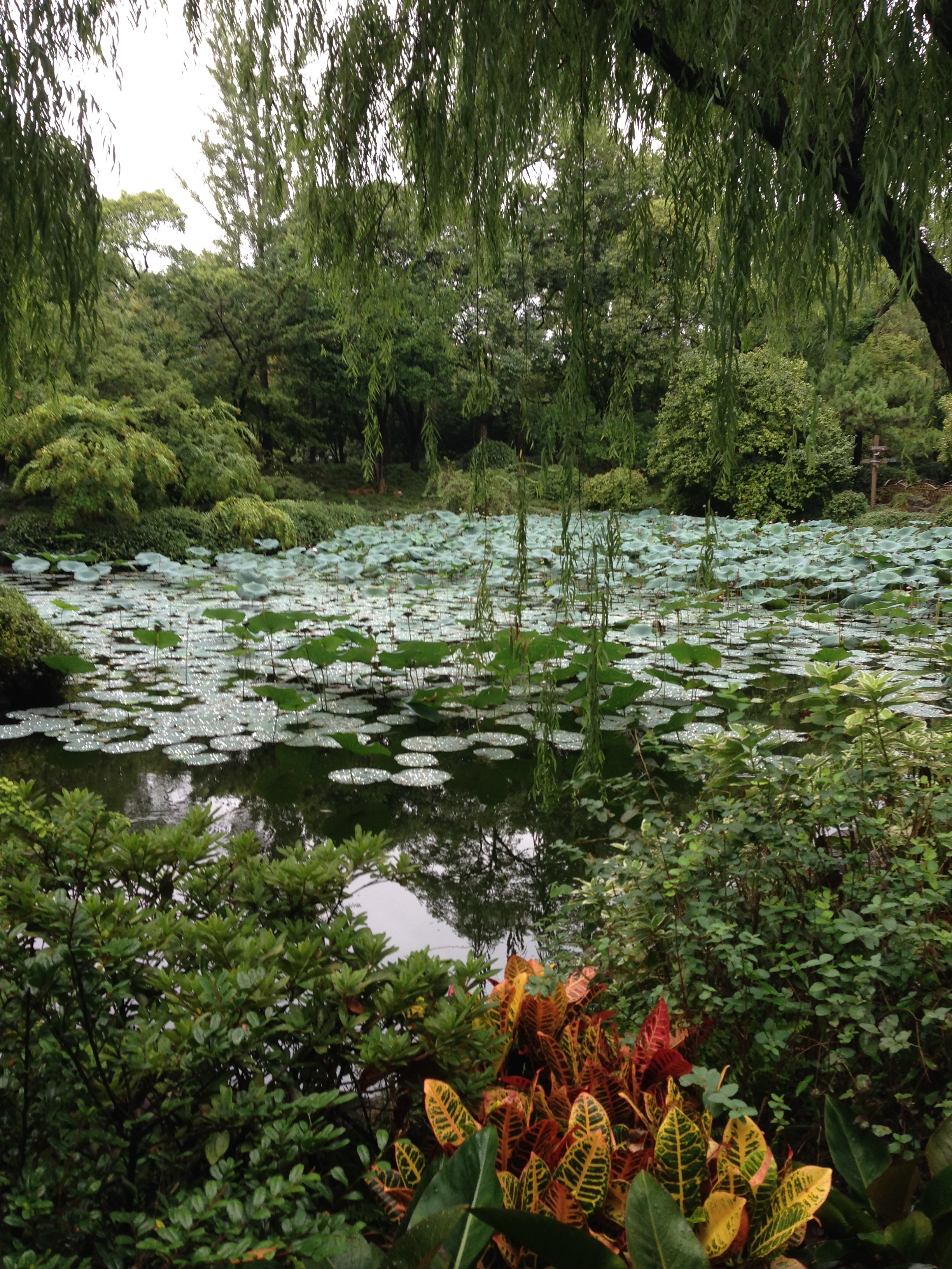 It's worth the search: a garden tucked away