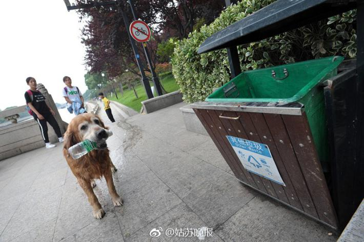 Dog in Suzhou recycles more than 2,000 bottles