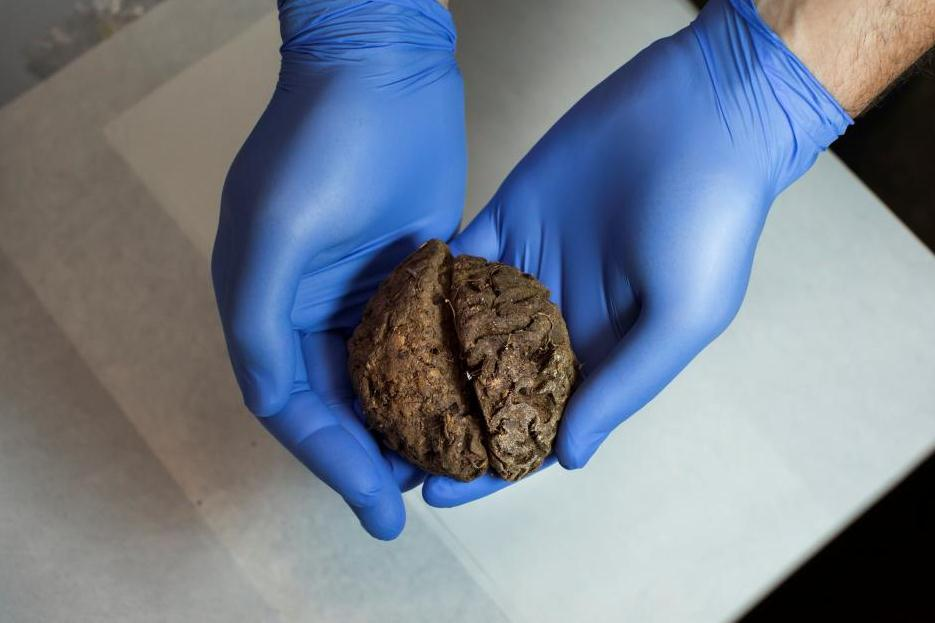 Dozens of naturally preserved brains found in Spanish Civil War-era mass grave