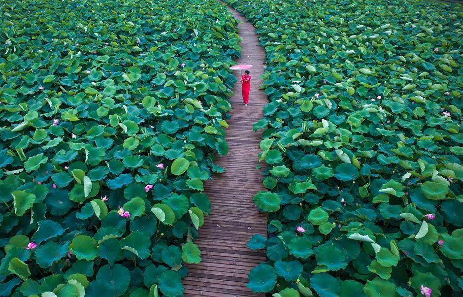Lotus festival celebrates exotic and ecological art