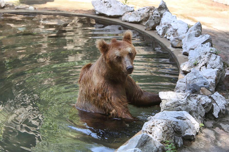 How do animals beat the heat in Shanghai