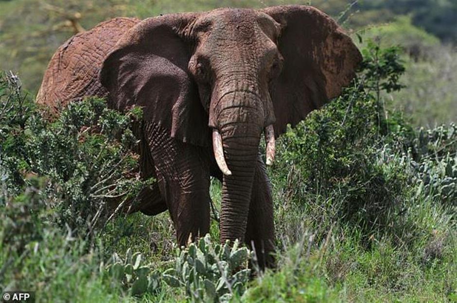 Elephant kills handler in Zimbabwe resort town