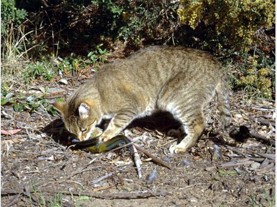 Japan woman dies of tick disease after bitten by sick cat