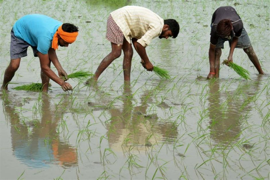 Global warming reduces protein in key crops