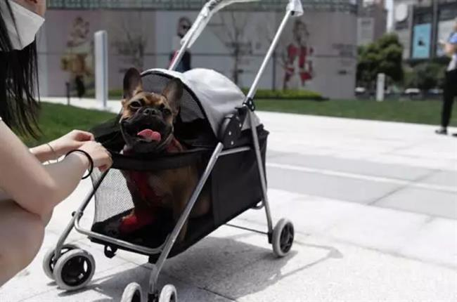 Mall cancels policy of allowing pets inside