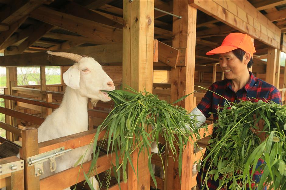 Enjoy a Happy Farm-er's life experience