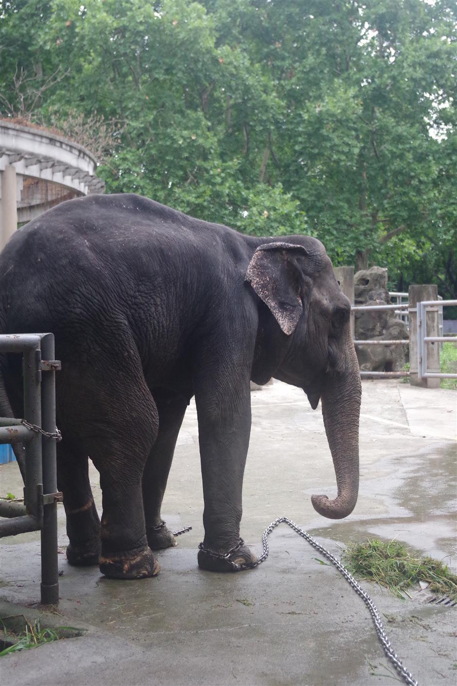 Beloved elephant Banna survives heatstroke after emergency care