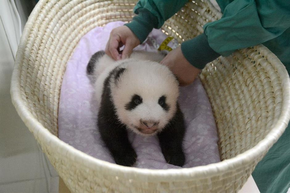 Tokyo zoo releases video of 'fluffy' baby panda