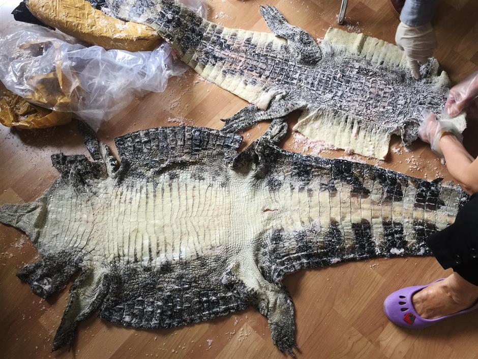 Customs catch endangered animal smugglers