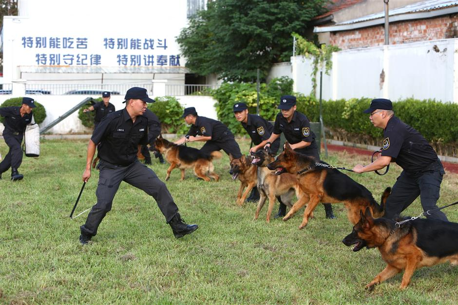 Dogs help to keep robbers at bay