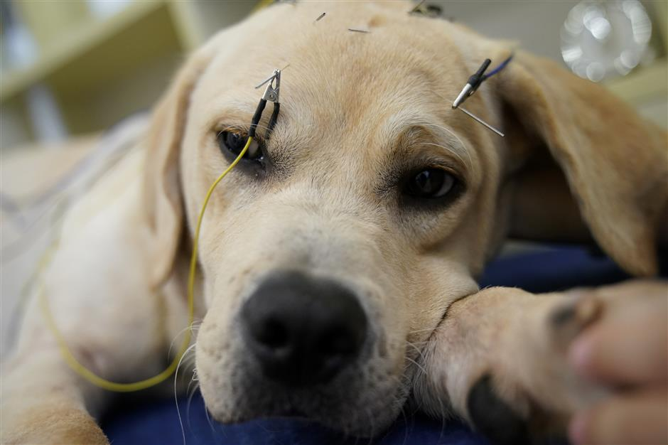 Needles and pins make for happier pets