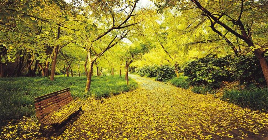 Chongming to host forest festival