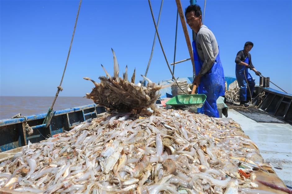 Now's the time for fresher and cheaper seafood