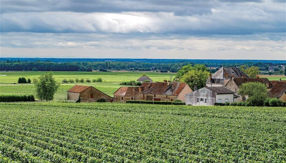 Chablis, a wine that speaks for itself