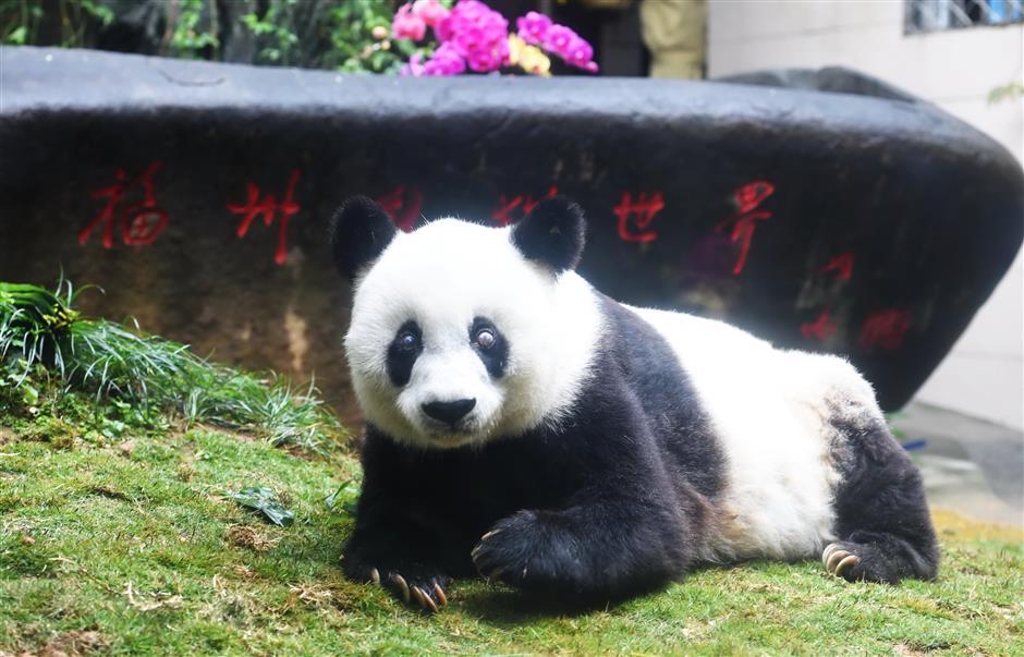 World's oldest panda dies aged 37