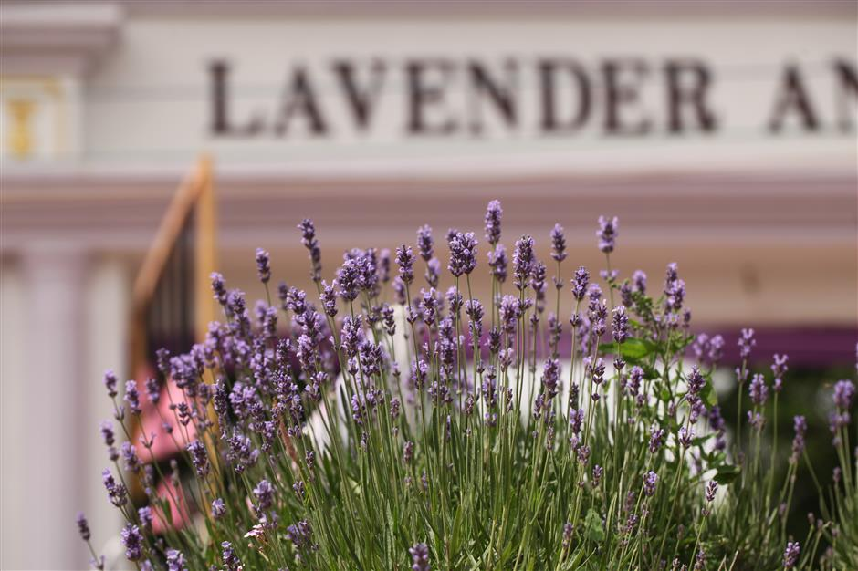 Love, lavender and laughs at Chongming festival