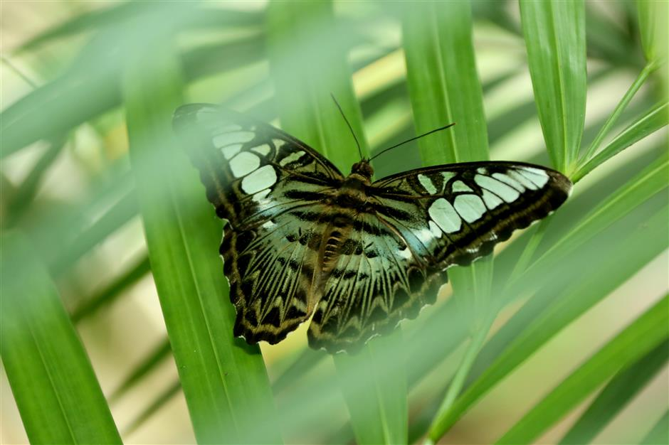 Shanghai Zoo launches butterfly exhibition