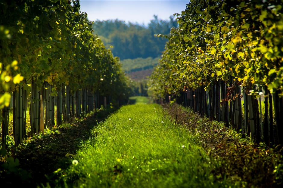 Austrian wine stands tall in balance and variety
