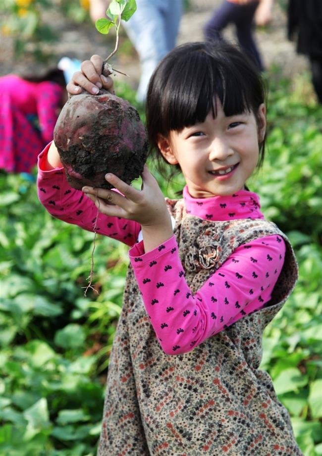 Songjiang District to host a fruit and vegetable picking event