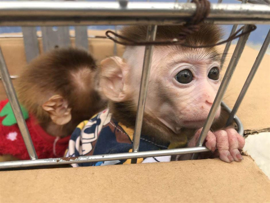 Couple held for capturing protected baby monkeys