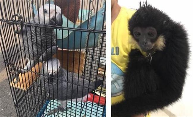 Police seize 20 for trading in endangered species