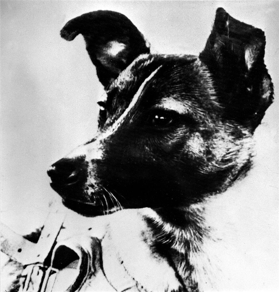 Forgive us Laika: the first animal in orbit