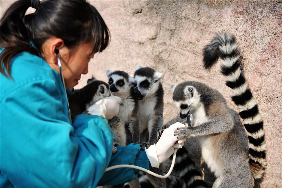 Animals at Qingdao Forest Wildlife World get health check
