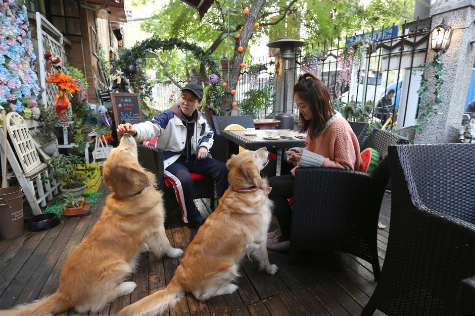 Pampered pets join the diners but are restaurants barking up the wrong tree?