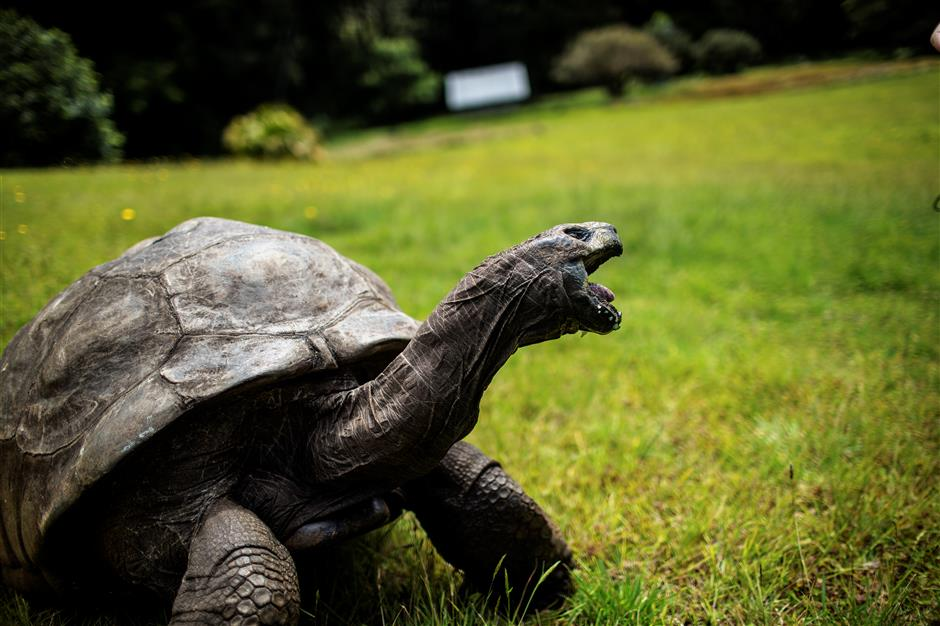 Air link for tourists to see ancient tortoise