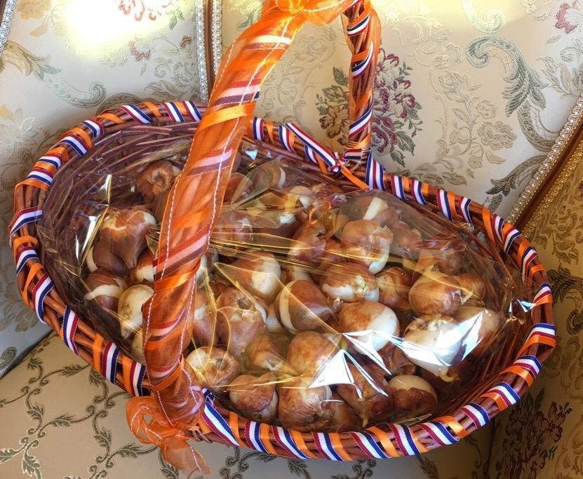 Dutch tulips to brighten local communities and schools