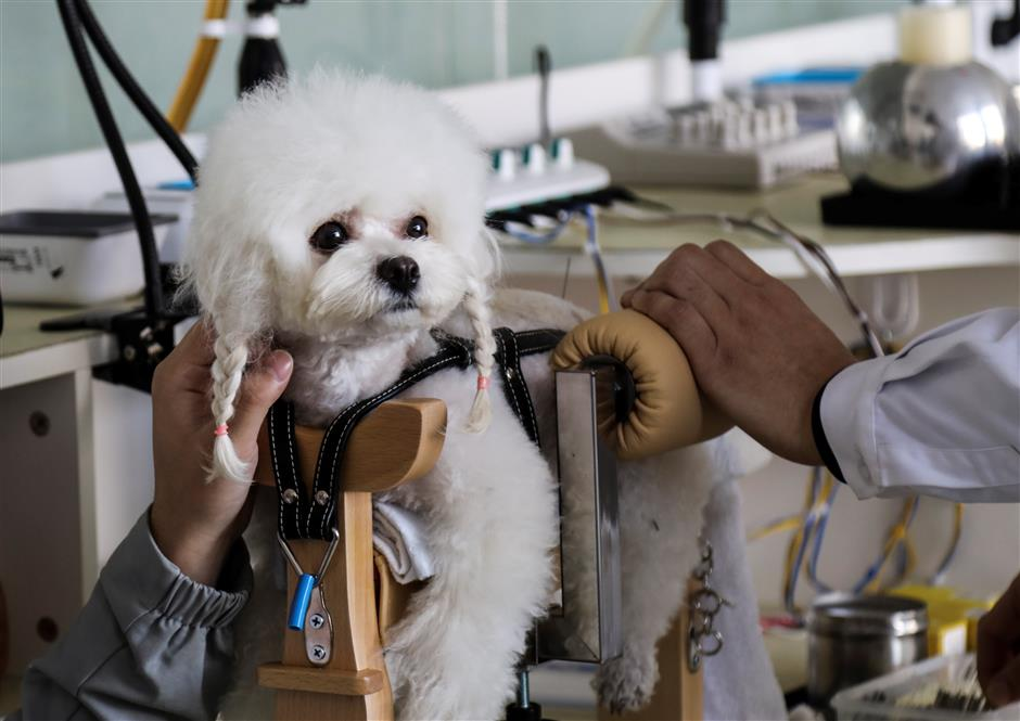 TCM for pets becomes popular across China