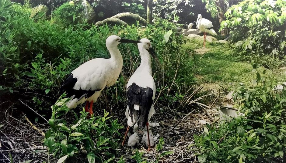 Endangered species secured in zoos