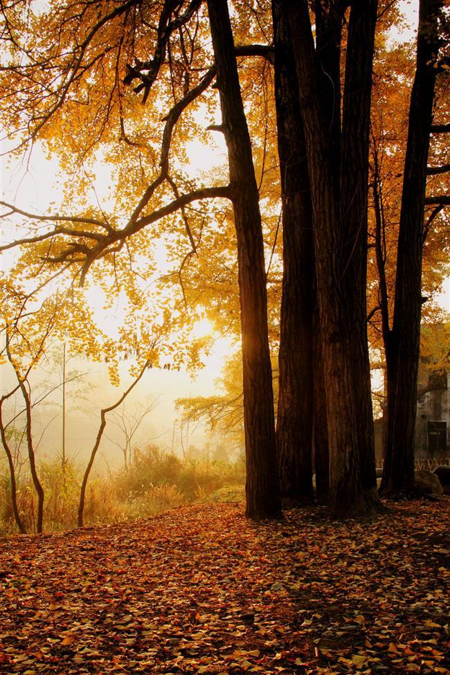 An idyllic natural paradise set in a fairy tale wonderland