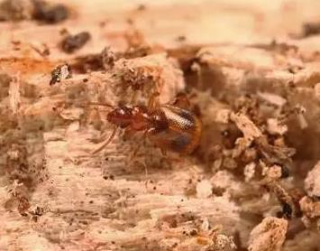 Never-before-seen beetle species found in Pudong