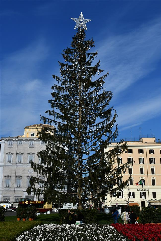 Rome mourns early death of Christmas tree 'Baldy'