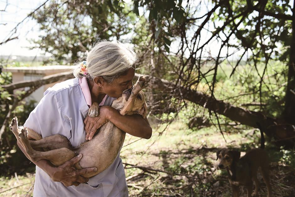Puerto Rico's other victims: Hundreds of animals abandoned due to hurricane