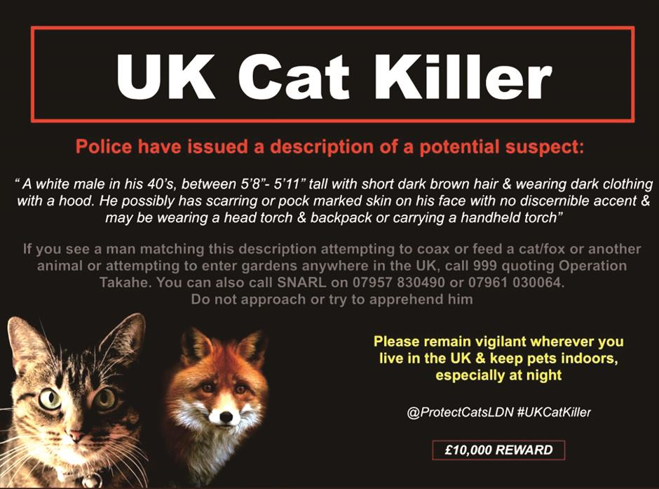 On the trail of serial cat killer