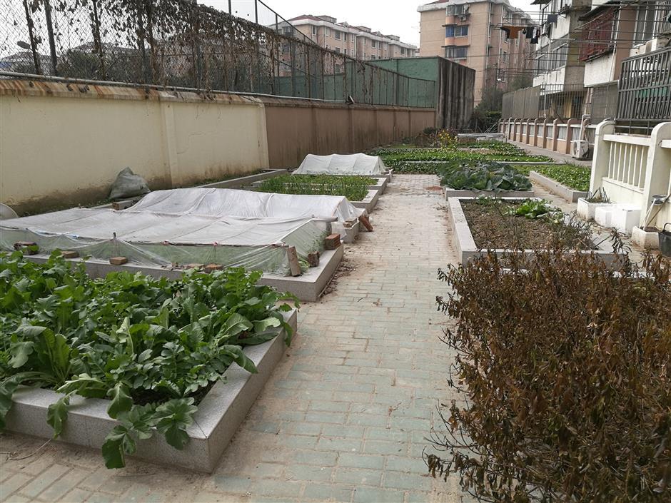 Green thumb neighborhoods go down the garden path