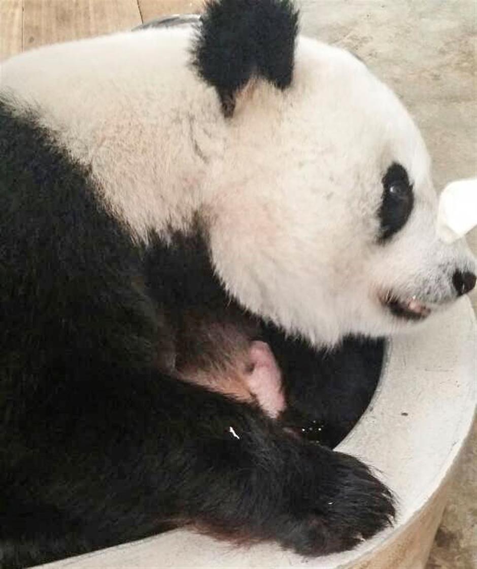 Malaysia says new-born giant panda is female