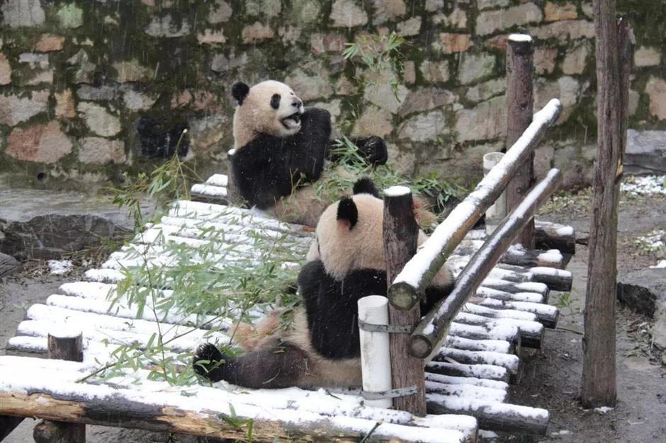 Snow forces significant park closures across Shanghai