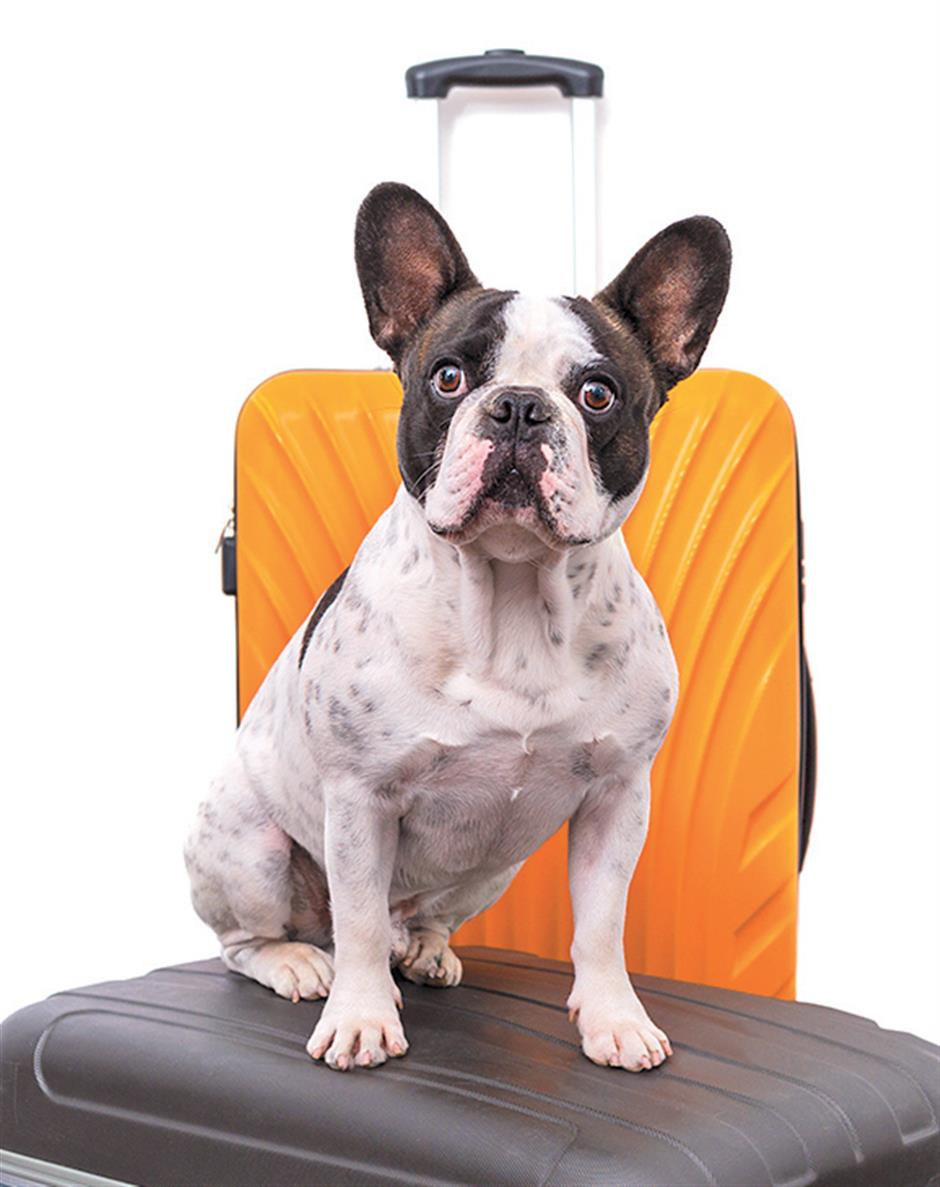 Now you can take your best fur friend in the cabin