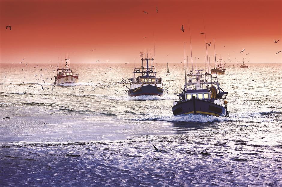 Half of world's oceans harvested by fishermen