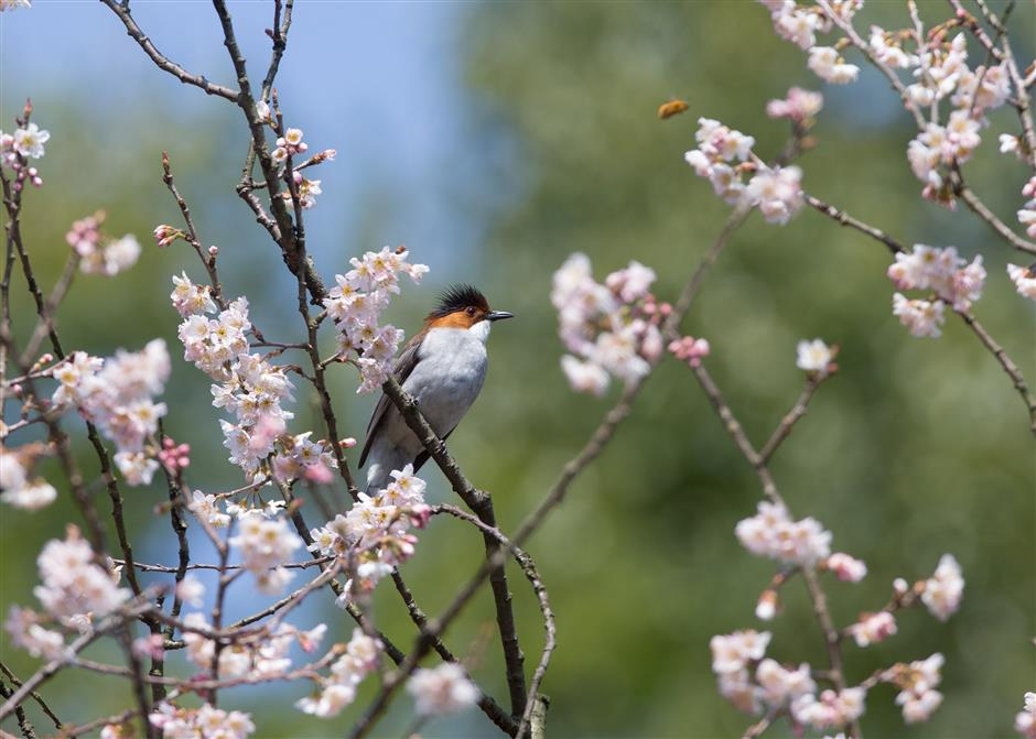 Spring blooms all over China