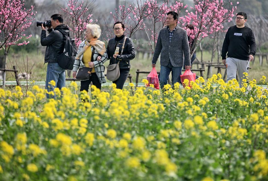 Festival floods urban landscape with a sea of blooming colors