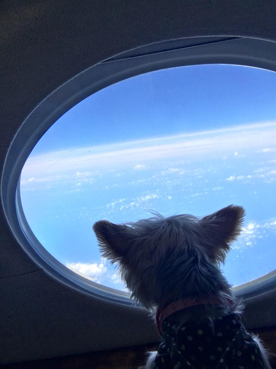 Pampered pooches fly high