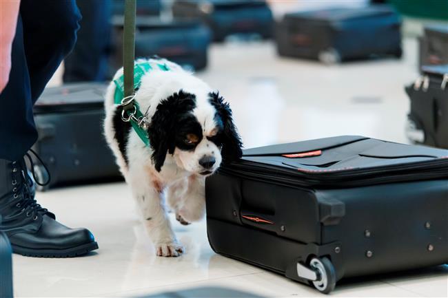 Sniffer dog put up for adoption