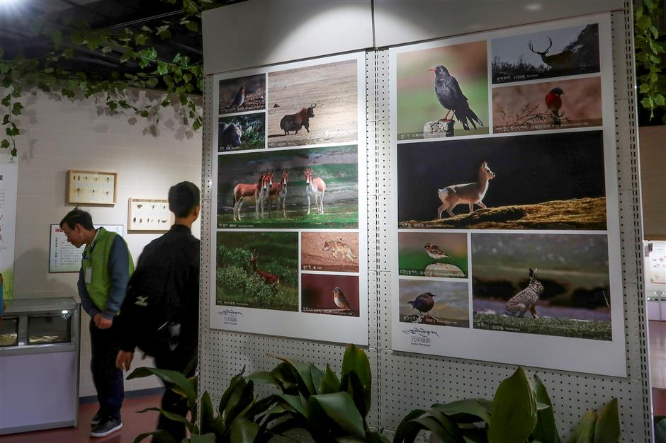 The wonders of our planet on display at Shanghai Zoo