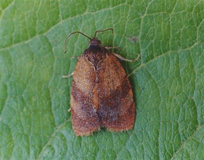 Harmful moths spotted by bureau