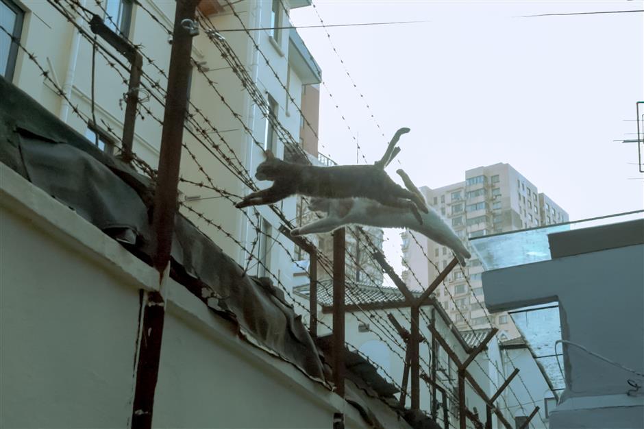 'Walking catnip' snaps street cats